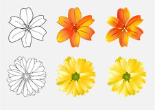 Flowers draft and color,  illustration Royalty Free Stock Image