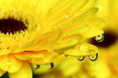 Flowers in droplets Stock Photos