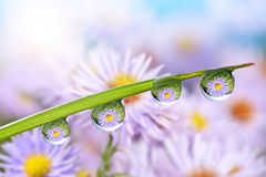 Flowers in the drops of dew on the green grass Royalty Free Stock Images