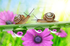 Flowers in the drops of dew on the green grass and snails. Stock Photo