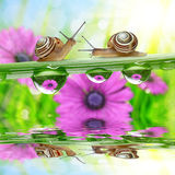 Flowers in the drops of dew on the green grass and snails. Stock Photography