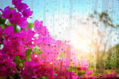 Flowers and drops of water on glass. Stock Photography