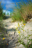 Flowers in the dune Stock Photography