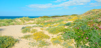 Flowers, dunes and water Royalty Free Stock Photography