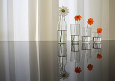 Flowers duplicated. Four flowers duplicated by the reflex of a table Stock Image