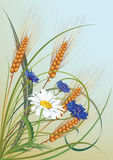 Flowers and ears of wheat Royalty Free Stock Photos