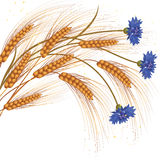 Flowers and ears of wheat Royalty Free Stock Image