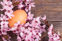 Flowers and eggs on  white background Stock Photo