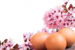 Flowers and eggs on  white background Stock Photos