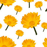 Flowers Elegance Seamless pattern. Abstract Royalty Free Stock Image