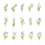 Flowers. Elements for design. Royalty Free Stock Photo