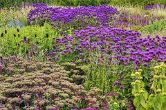 Flowers in English garden Royalty Free Stock Photo