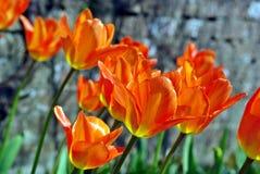 Flowers enjoying spring sunshine Stock Photography