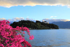 Flowers on the Erhai lake of yunnan Stock Photo