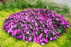 Flowers at the Esplanade Park. Riga, Latvia. Flower plant at the Esplanade Park on a sunny summer day. Riga, Latvia Stock Image
