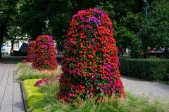 Flowers at the Esplanade Park. Riga, Latvia. Flower trees at the Esplanade Park. Riga, Latvia Stock Photo