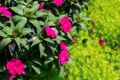 Flowers at the Esplanade Park. Riga, Latvia. Flowers at the Esplanade Park on a sunny summer day. Riga, Latvia Stock Photography
