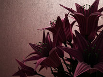 The flowers in the evening light Royalty Free Stock Photography