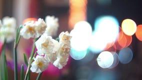 Flowers evening street stock video footage