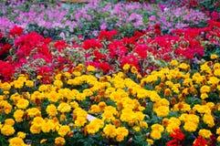 Flowers Exhibition Stock Photo