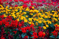 Flowers Exhibition Royalty Free Stock Images