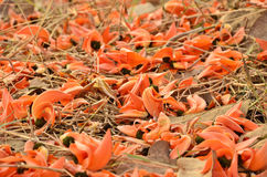 Flowers fall on the dried grass Royalty Free Stock Photos