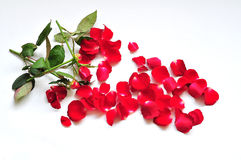 Flowers fall in pieces Stock Image