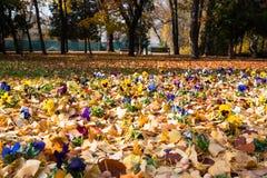 Flowers in fallen leaves Stock Photo