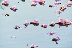 Flowers falling on the surface of water Royalty Free Stock Photo