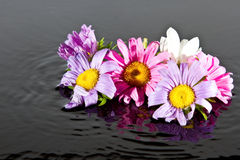 Flowers falling into water Royalty Free Stock Images
