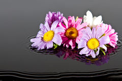 Flowers falling into water Stock Images