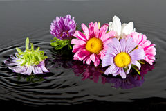 Flowers falling into water Stock Photography
