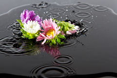 Flowers falling into water Royalty Free Stock Image