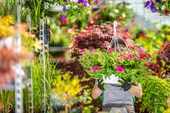 Flowers Farming Work Stock Images