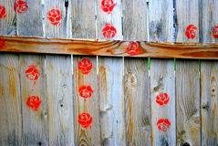 Flowers on fence. Royalty Free Stock Images