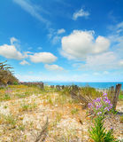 Flowers and fence by the shore in Alghero Stock Image