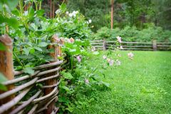 Flowers on a fence in summer Royalty Free Stock Photography