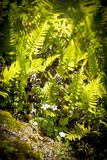 Flowers And Ferns. Wild flowers and ferns in sunlight stock photo
