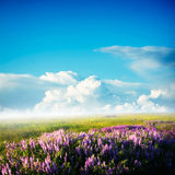 Flowers field. Nature background, spring morning... field of green grass and cloudy sky Royalty Free Stock Photography