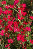 Flowers, field. Nature, green, red, meadow, grass Stock Photo