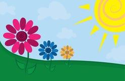 Flowers in Field. Three flowers in a sunny field Stock Photo