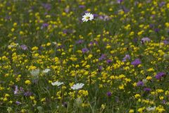 Flowers field. In Wijster, Netherlands Stock Photos