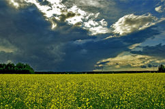 Flowers field. Travelling across Europe. A sunset on a flower field Royalty Free Stock Photos