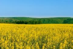 Flowers field in Bakota Park Royalty Free Stock Image