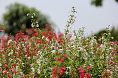 Flowers field. Are so beautiful Royalty Free Stock Photo