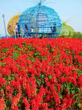Flowers field. Beautiful nature are all around in Thailand Royalty Free Stock Photos