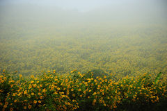 Flowers field on fog in the morning time Royalty Free Stock Image