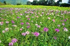 Flowers field Stock Photos
