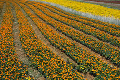 Flowers field Stock Image