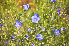 Flowers in field Stock Image